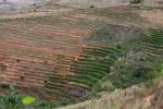 Terraced rice fields near Fianarantsoa [madagascar_5653]