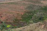 Terraced rice fields near Fianarantsoa [madagascar_5654]