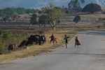 Zebu-herding boys doing kung fu moves on RN7 near Anja [madagascar_5672]