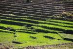Emerald rice fields [madagascar_6040]
