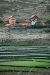 Rice fields in the Antanifotsy Valley [madagascar_6197]