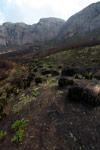 Ferns emerging from charred earth [madagascar_6383]