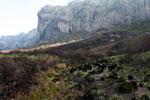 Ferns emerging from charred earth [madagascar_6387]