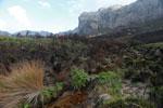 Ferns emerging from charred earth [madagascar_6392]