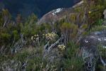 Andringitra vegetation [madagascar_6426]