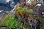Andringitra vegetation [madagascar_6427]