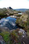 Creek-side vegetation in Andringitra