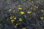 Flowers [madagascar_6565]