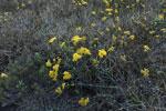 Flowers [madagascar_6566]