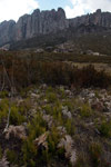 Ferns and other vegetation in Andringitra NP [madagascar_6568]