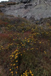 Yellow flowers [madagascar_6585]