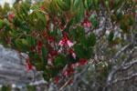 Andringitra plants [madagascar_6598]