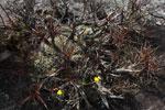 Andringitra plants [madagascar_6604]