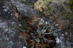 Andringitra plants [madagascar_6612]