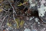 Andringitra plants [madagascar_6617]