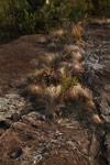 Andringitra vegetation [madagascar_6707]