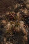 Andringitra vegetation [madagascar_6708]