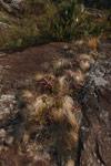 Andringitra vegetation [madagascar_6710]
