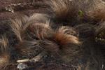 Andringitra vegetation [madagascar_6713]