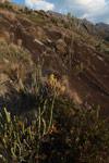 Andringitra plants [madagascar_6721]