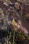Andringitra plants [madagascar_6722]