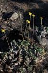 Andringitra plants [madagascar_6799]