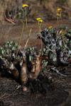 Andringitra plants [madagascar_6801]