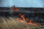 Brushfire in Madagascar [madagascar_6914]