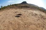 Oustalet's chameleon walking across sand near Isalo [madagascar_7337]