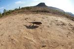 Oustalet's chameleon walking across sand near Isalo [madagascar_7338]