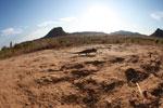 Oustalet's chameleon walking across sand near Isalo [madagascar_7346]