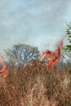 Grassfire [madagascar_7495]