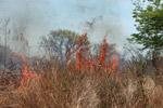 Grassfire [madagascar_7496]