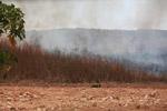 Grassfire [madagascar_7527]