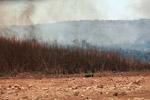 Grassfire [madagascar_7529]