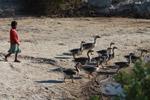 Vezo child herding geese [madagascar_7919]