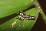 Multicolored spider [mcar_0031]