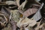 Butterfly [mcar_0039]