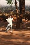 Verreaux's Sifaka dancing [mcar_0117]