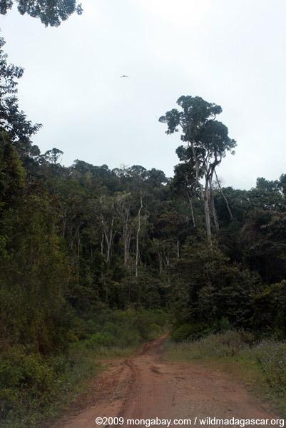 Rainforest road in Mantandia