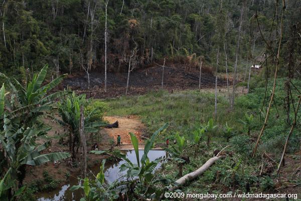 Small village near Mantadia; slash-and-burn (tavy) agriculture