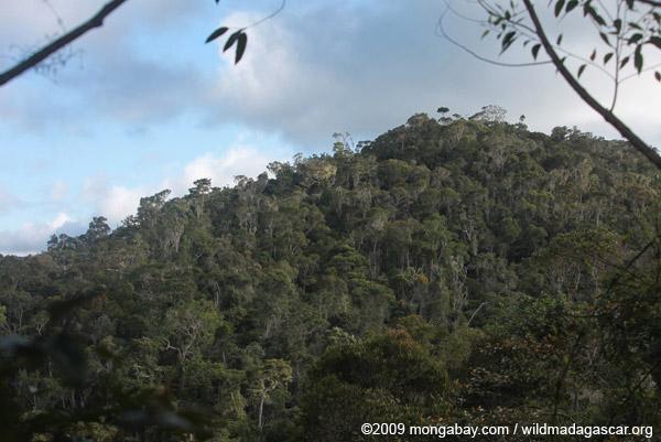 Mantadia rainforest