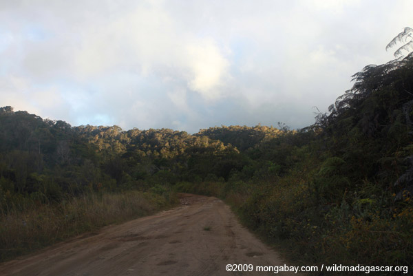 Road in Mantadia National Park