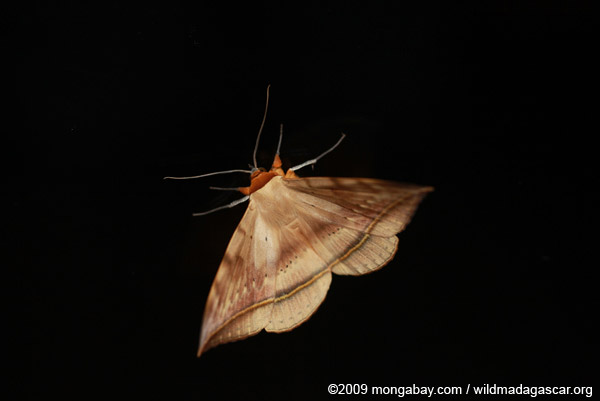 Unidentified moth emerges from the dark