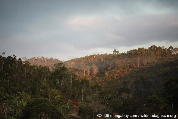 Montane rainforest in Madagascar