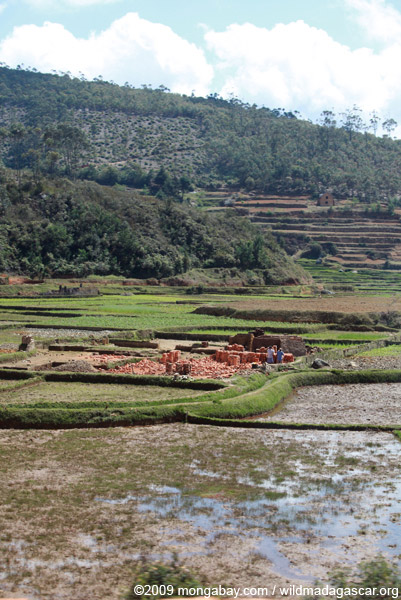 Brick-making in the rice fields of Madagascar
