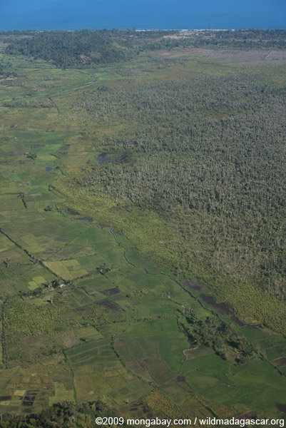 Rice fields and swamp forest near Maroantsetra