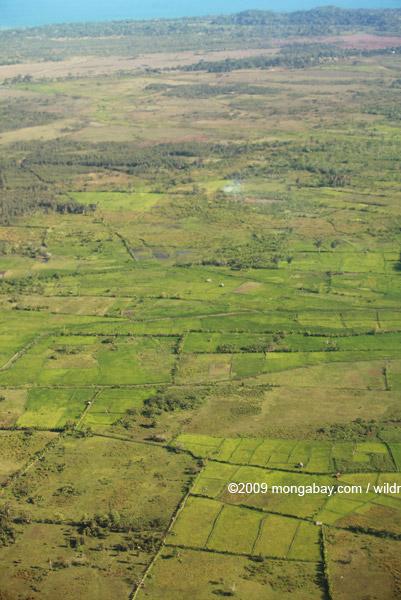 Aerial view of rice paddies near Maroantsetra
