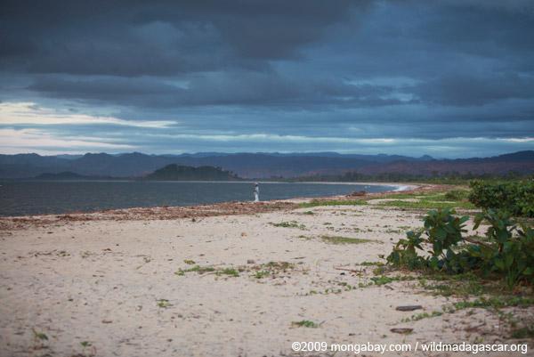 Bay of Antongil beach