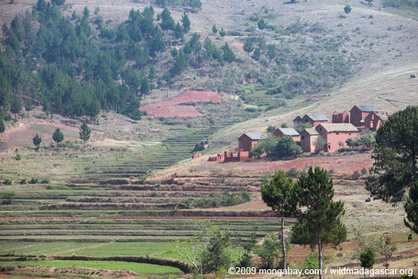Rice fields and bricks houses of the Hauts-Plateaux in Madagascar